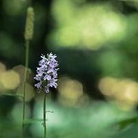 Orchidee langs de kant van de weg
